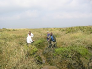 Sample Collecting at the Colne Estuary